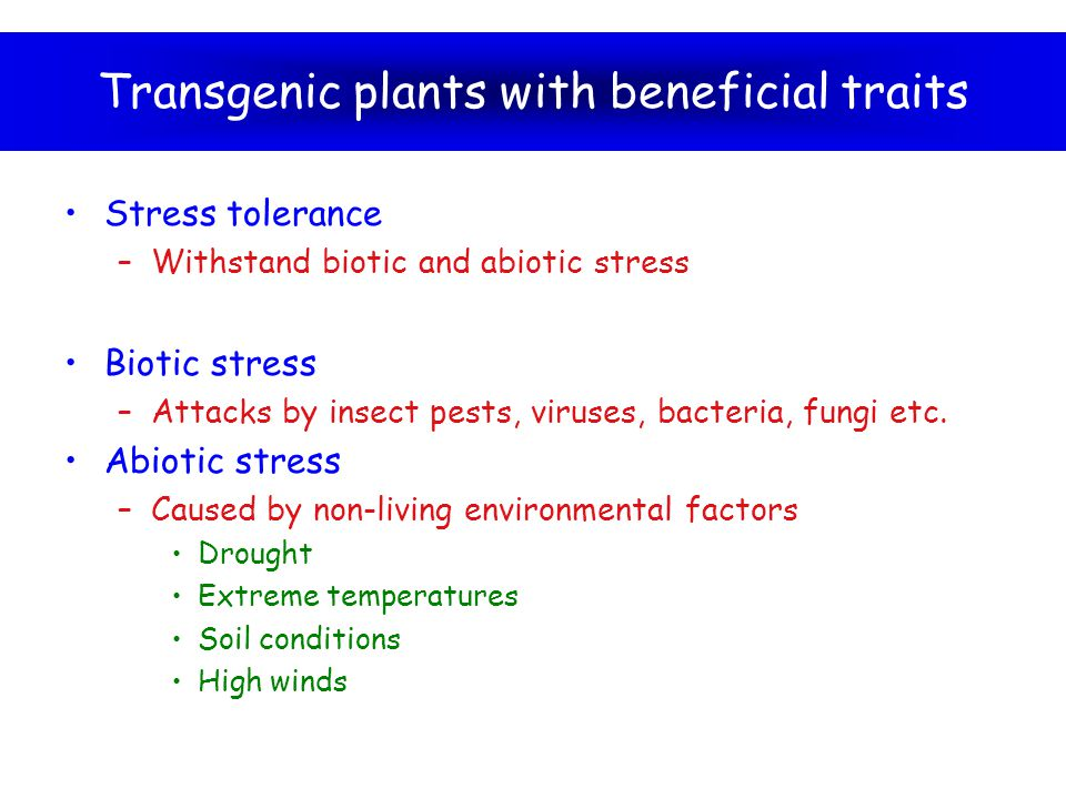 Transgenic plants with beneficial traits