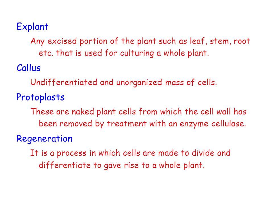Explant Callus Protoplasts Regeneration