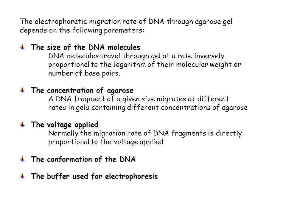 The electrophoretic migration rate of DNA through agarose gel depends on the following parameters: