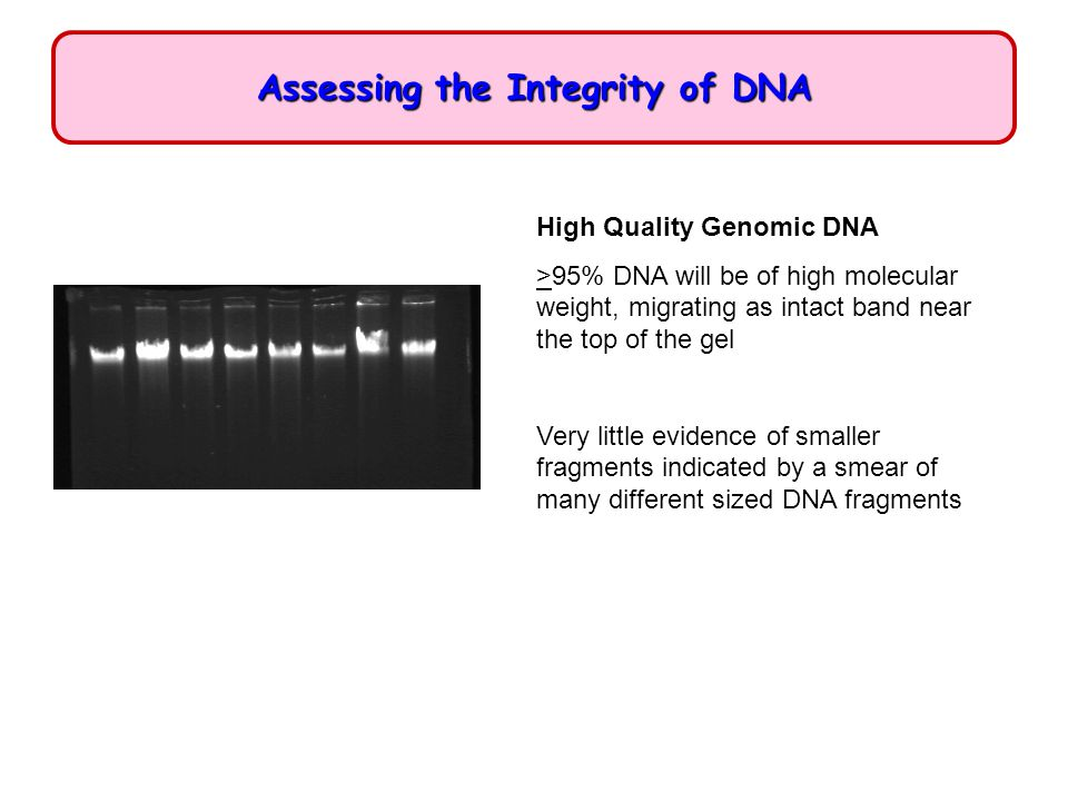 Assessing the Integrity of DNA