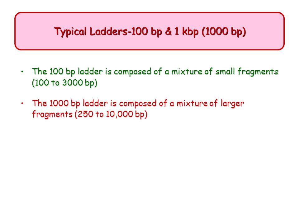 Typical Ladders-100 bp & 1 kbp (1000 bp)