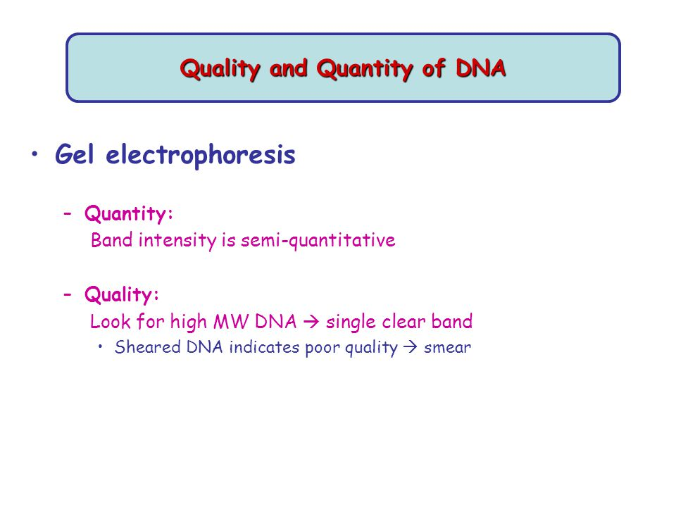 Quality and Quantity of DNA