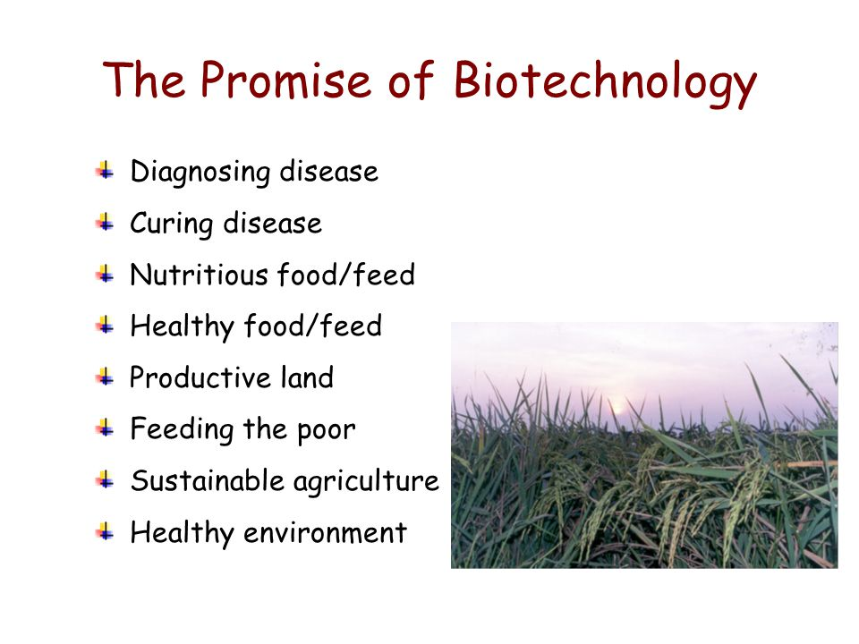 The Promise of Biotechnology