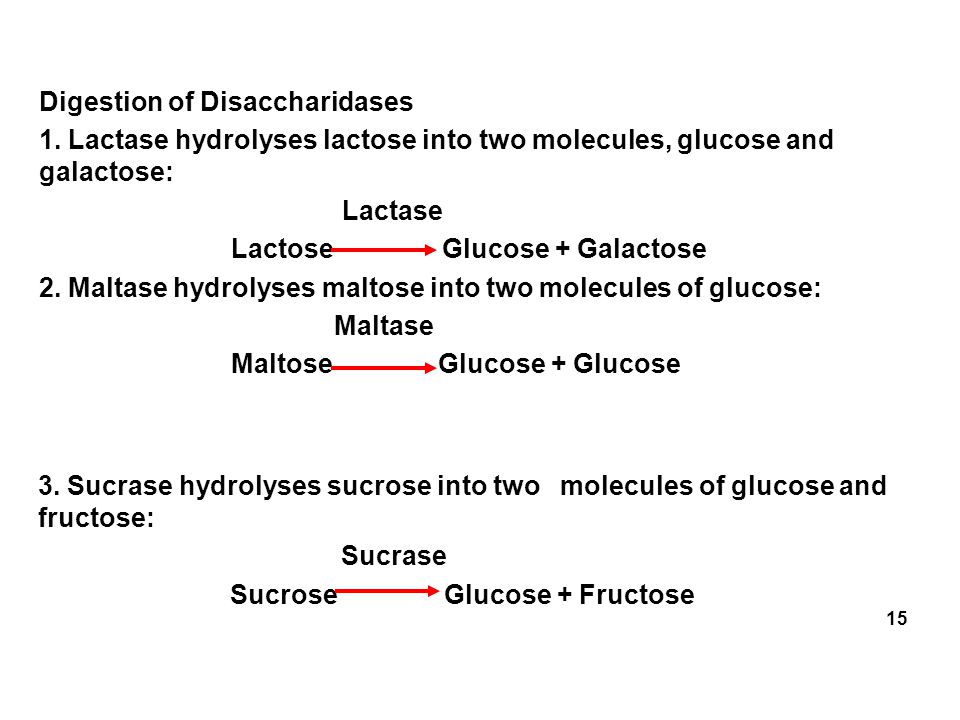 Digestion of Disaccharidases