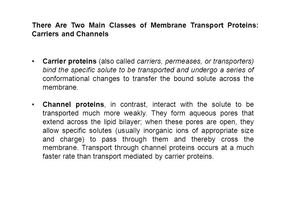 There Are Two Main Classes of Membrane Transport Proteins: Carriers and Channels