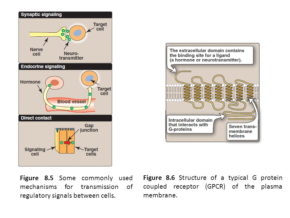 Figure 8.5 Some commonly used mechanisms for transmission of regulatory signals between cells.