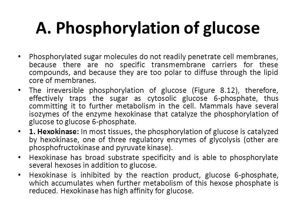 A. Phosphorylation of glucose