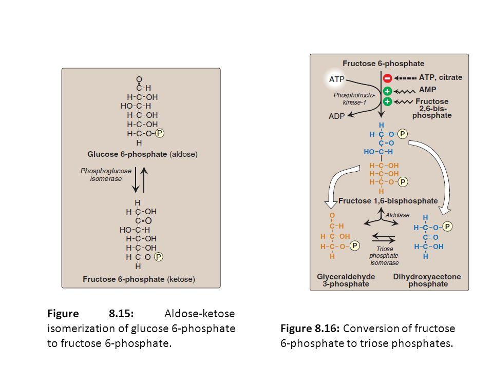 Figure 8.15: Aldose-ketose isomerization of glucose 6-phosphate to fructose 6-phosphate.