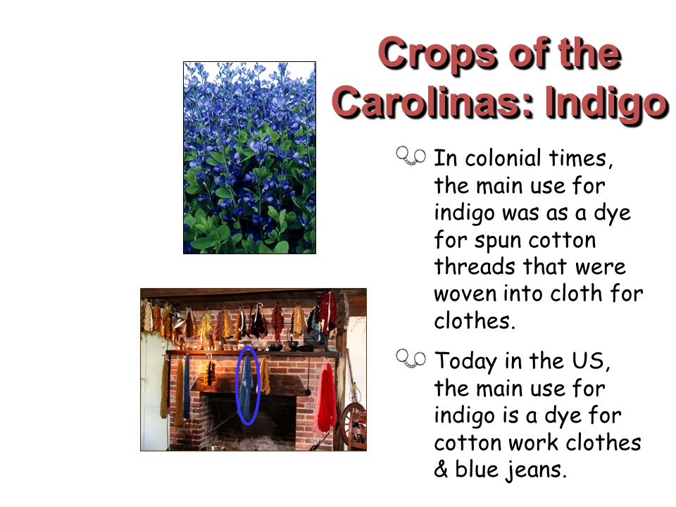Crops of the Carolinas: Indigo