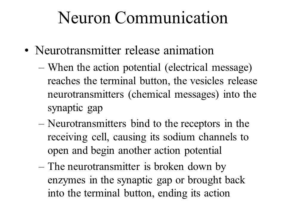 Neuron Communication Neurotransmitter release animation