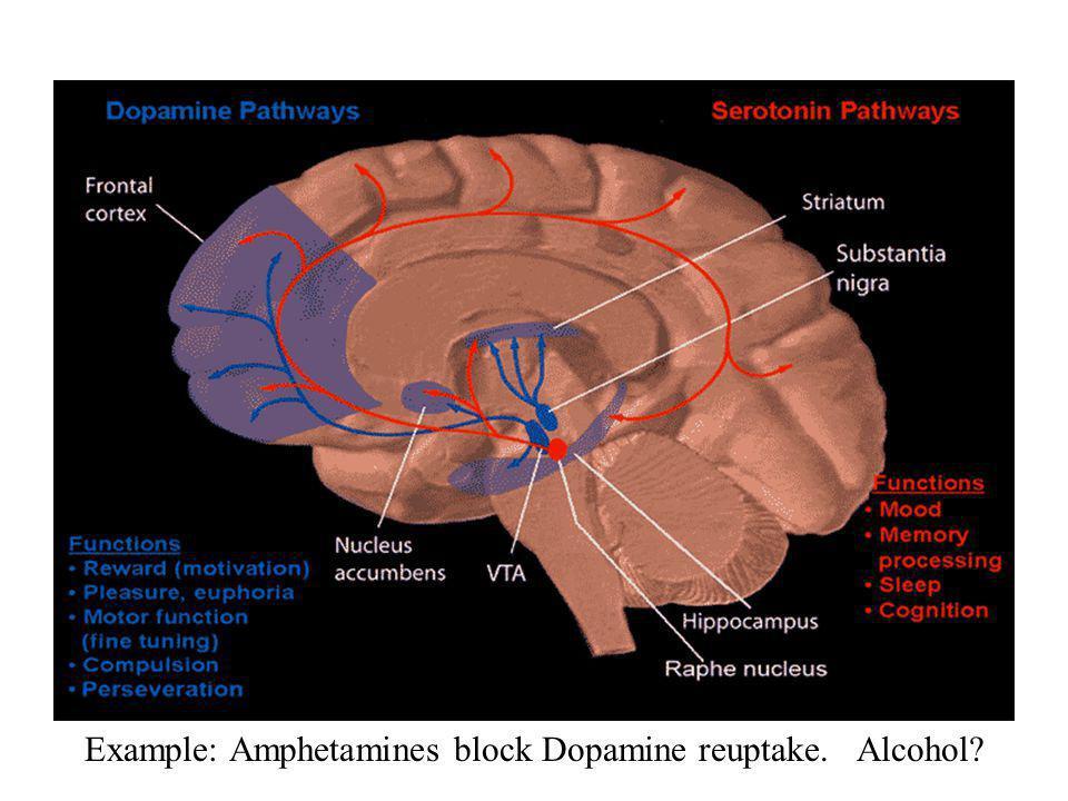 Example: Amphetamines block Dopamine reuptake. Alcohol