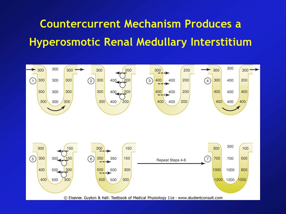 Countercurrent Mechanism Produces a Hyperosmotic Renal Medullary Interstitium