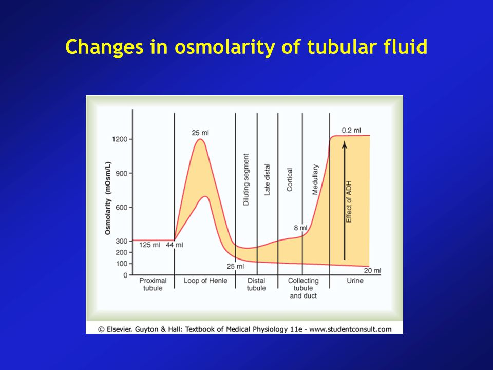 Changes in osmolarity of tubular fluid