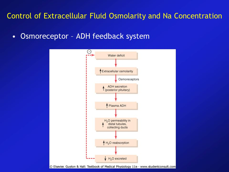 Control of Extracellular Fluid Osmolarity and Na Concentration