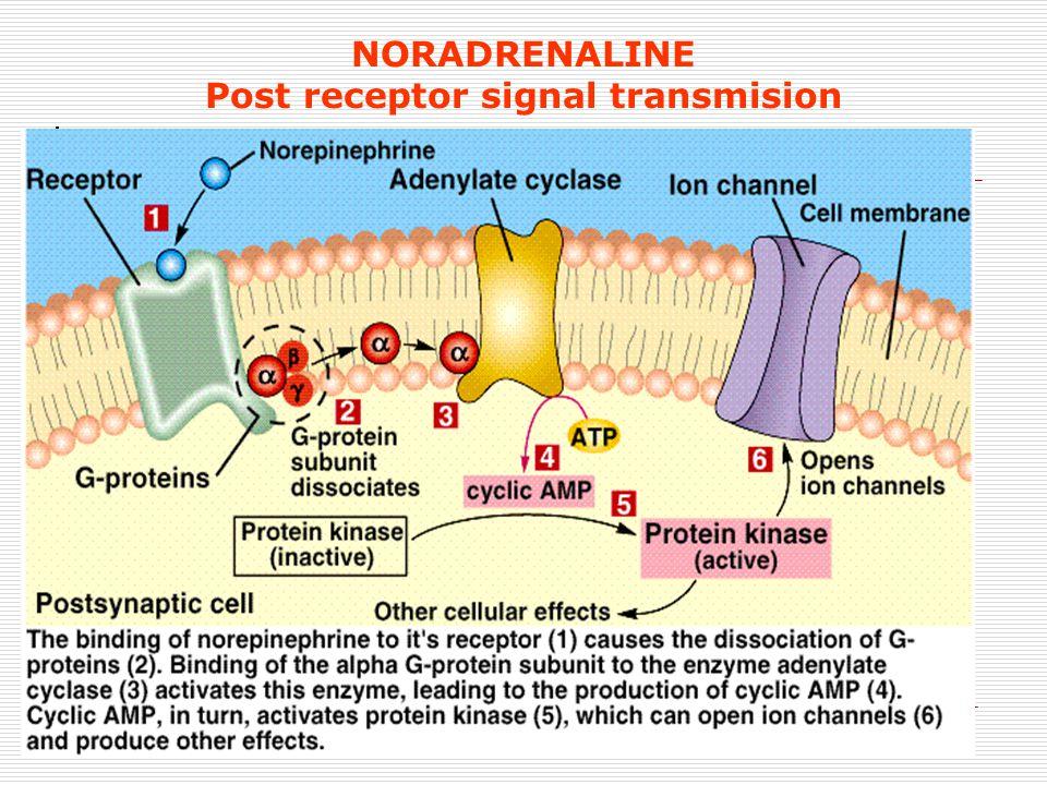 NORADRENALINE Post receptor signal transmision