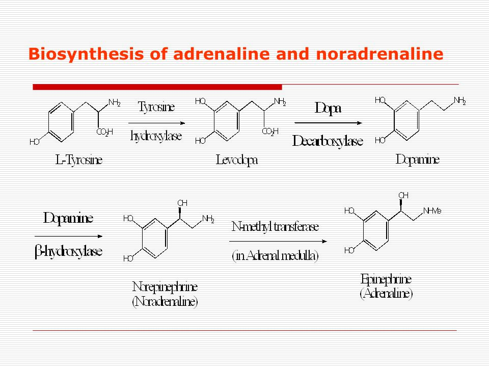Biosynthesis of adrenaline and noradrenaline