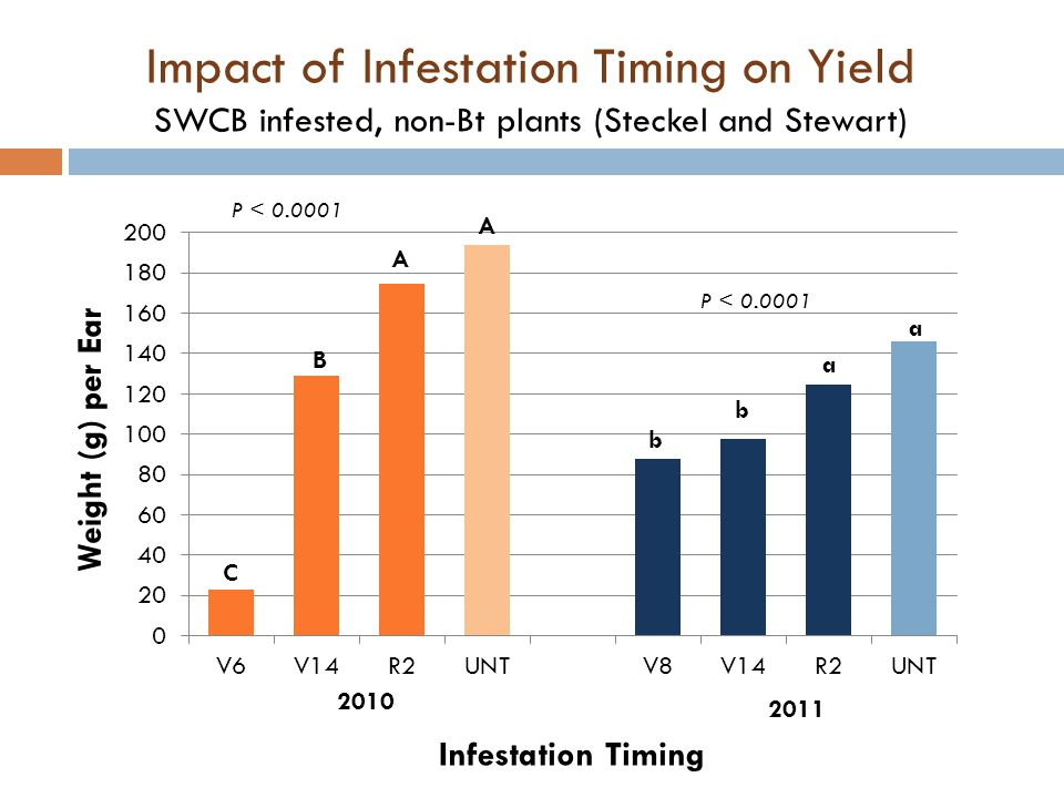 Impact of Infestation Timing on Yield SWCB infested, non-Bt plants (Steckel and Stewart)