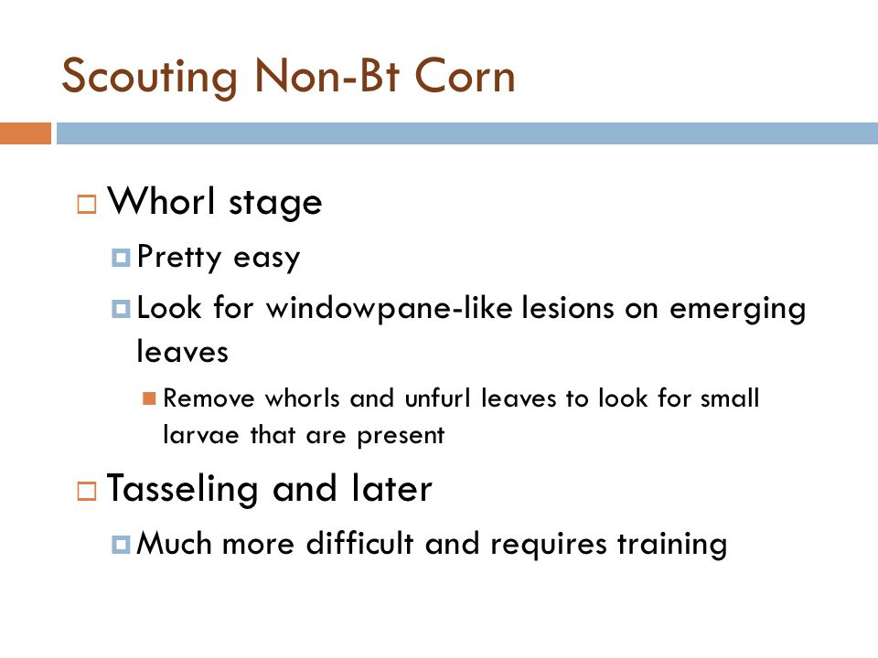 Scouting Non-Bt Corn Whorl stage Tasseling and later Pretty easy