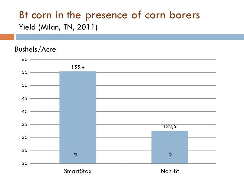 Bt corn in the presence of corn borers Yield (Milan, TN, 2011)