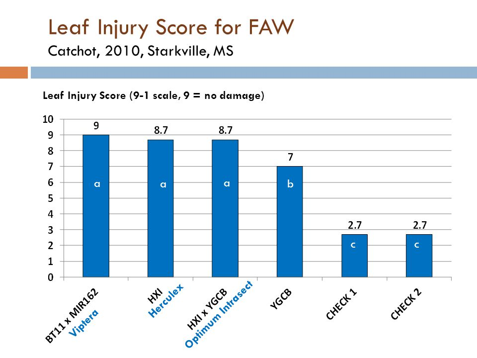 Leaf Injury Score for FAW Catchot, 2010, Starkville, MS