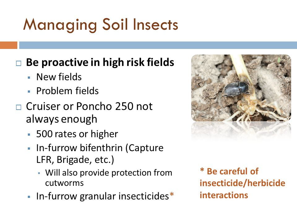 Managing Soil Insects Be proactive in high risk fields