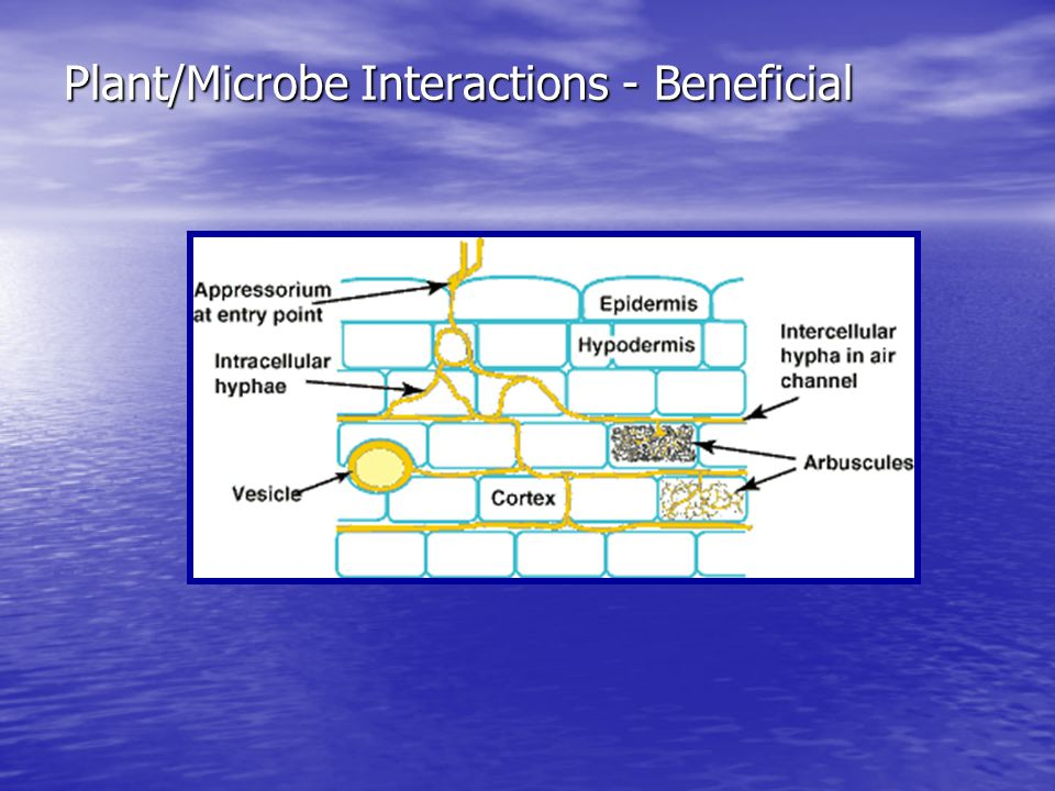 Plant/Microbe Interactions - Beneficial