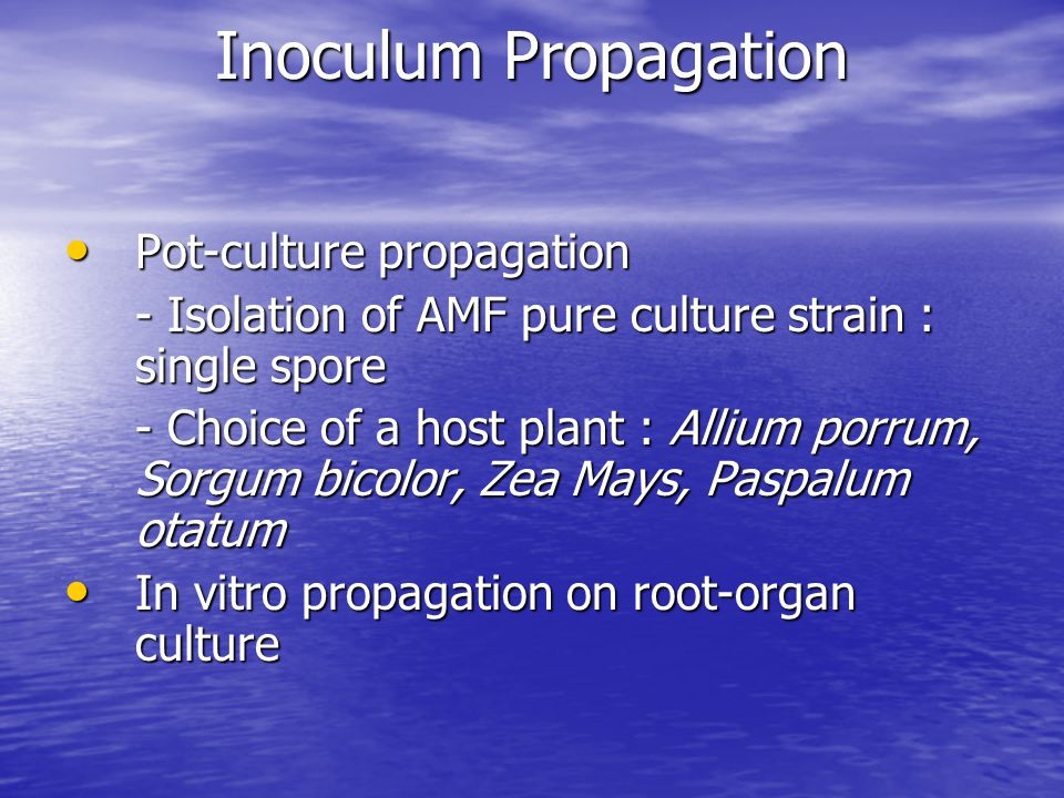 Inoculum Propagation Pot-culture propagation