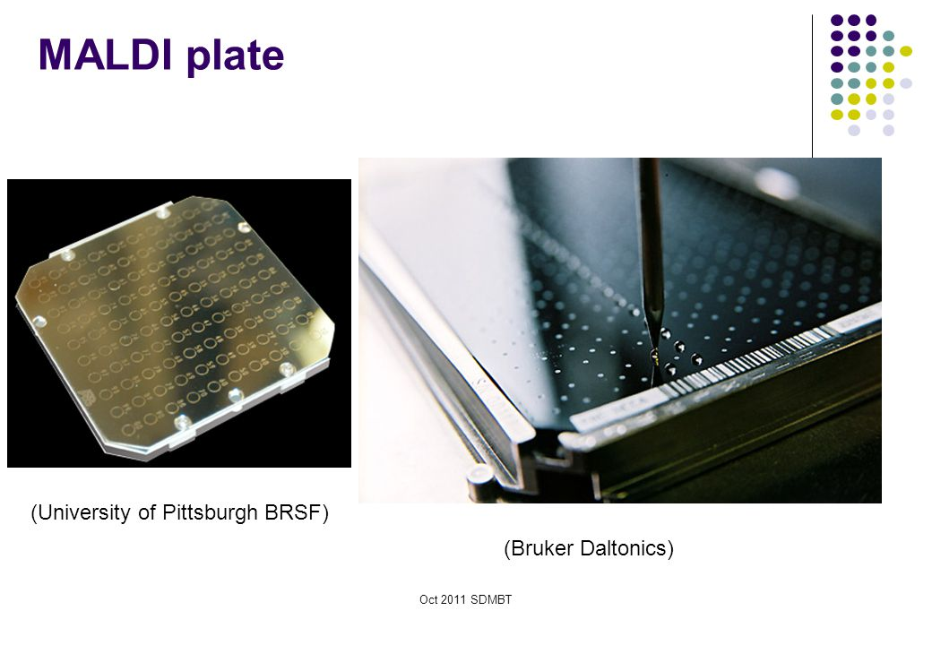 MALDI plate (University of Pittsburgh BRSF) (Bruker Daltonics)