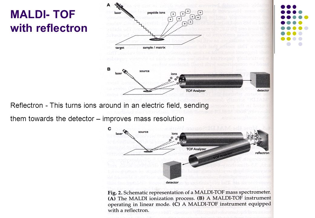 MALDI- TOF with reflectron