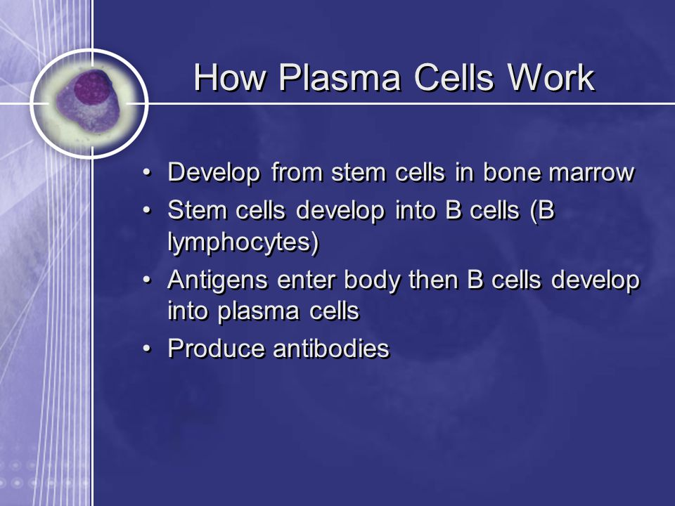 How Plasma Cells Work Develop from stem cells in bone marrow