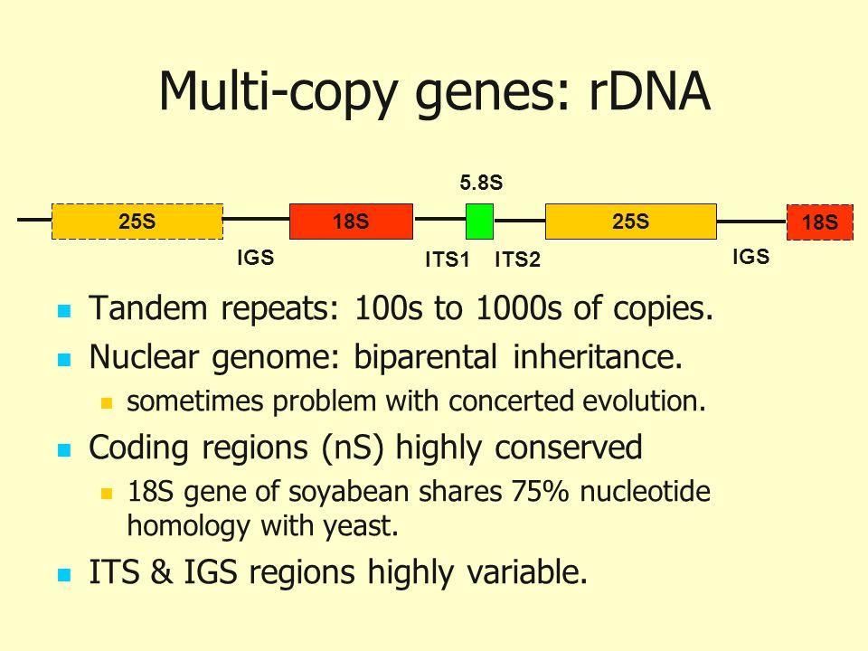 Multi-copy genes: rDNA