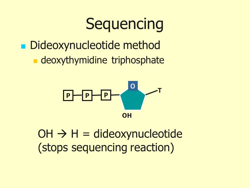 Sequencing Dideoxynucleotide method OH  H = dideoxynucleotide