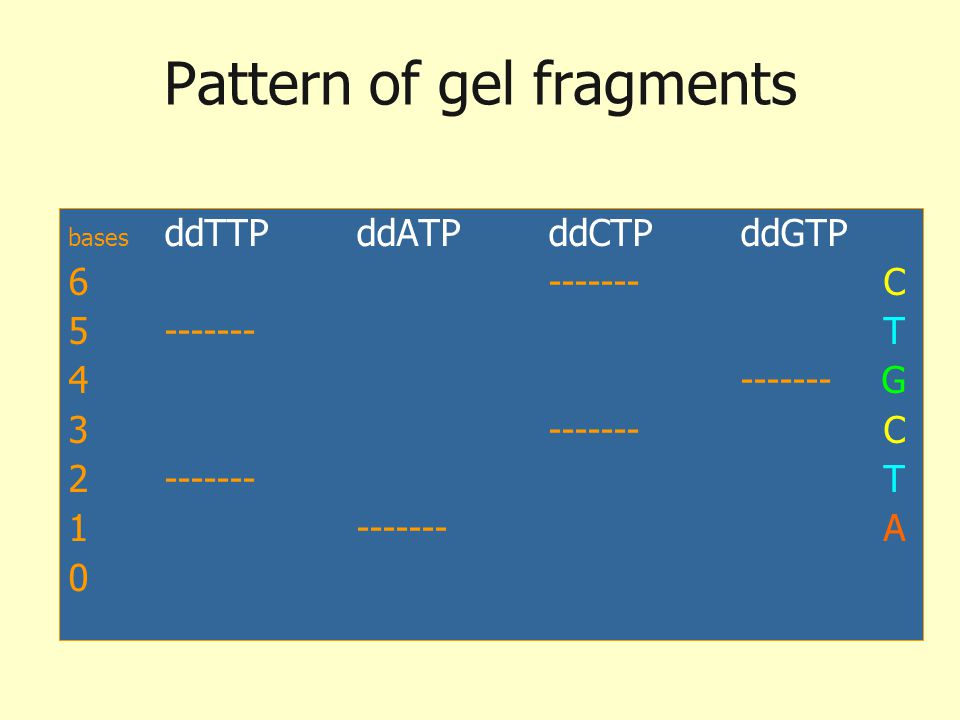 Pattern of gel fragments