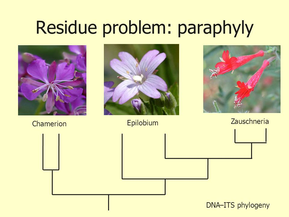 Residue problem: paraphyly