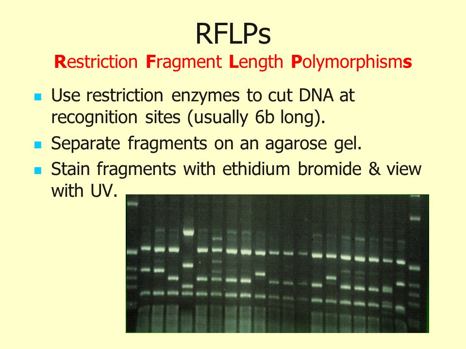 RFLPs Restriction Fragment Length Polymorphisms
