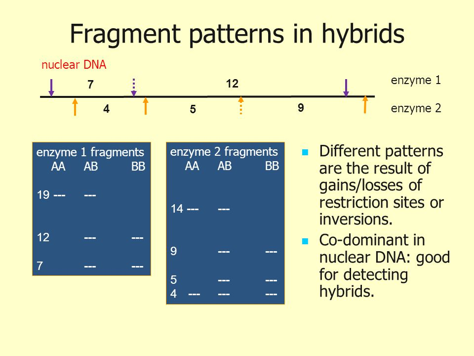 Fragment patterns in hybrids