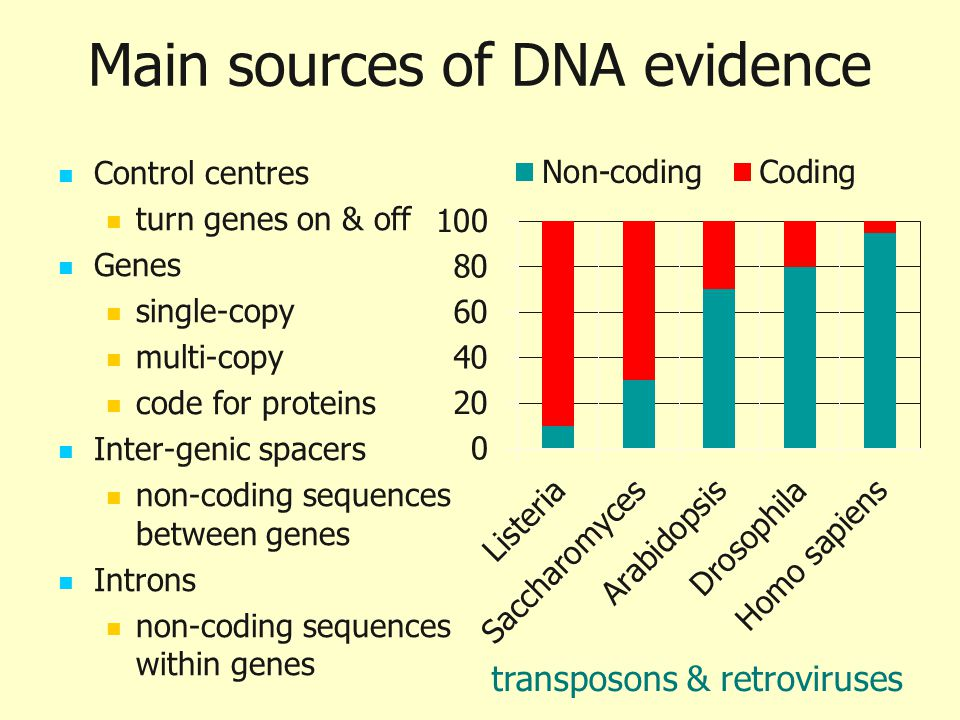 Main sources of DNA evidence
