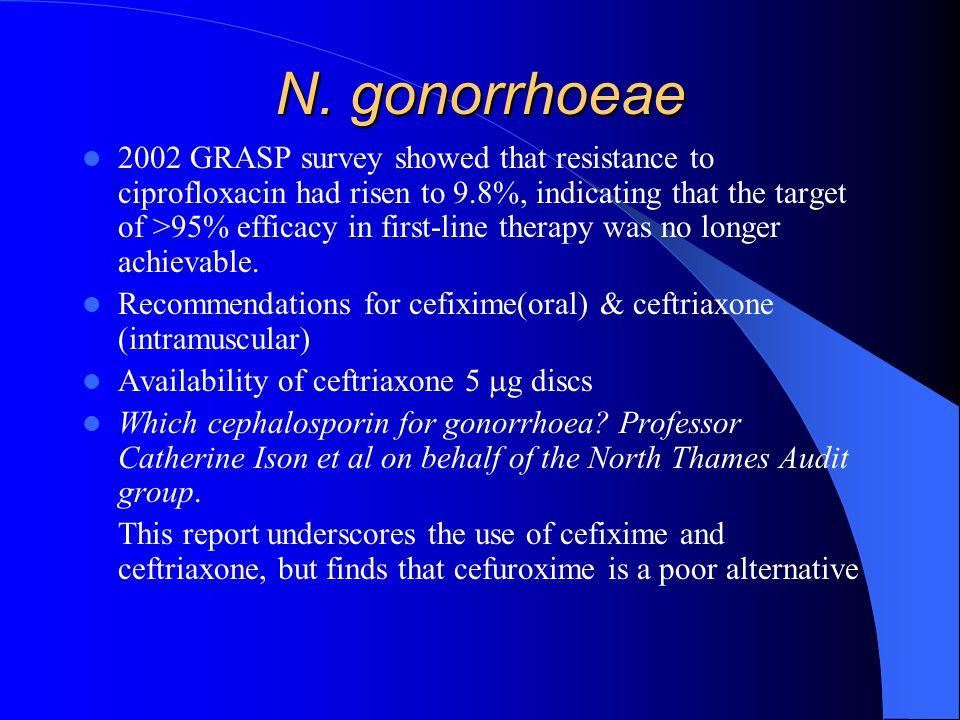 N. gonorrhoeae