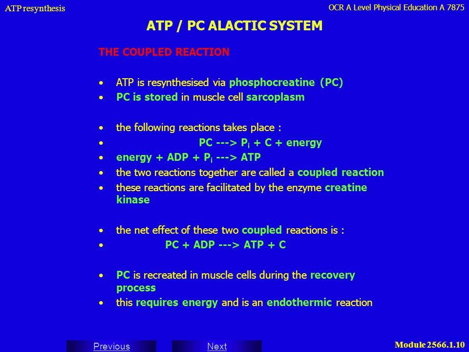 ATP / PC ALACTIC SYSTEM THE COUPLED REACTION