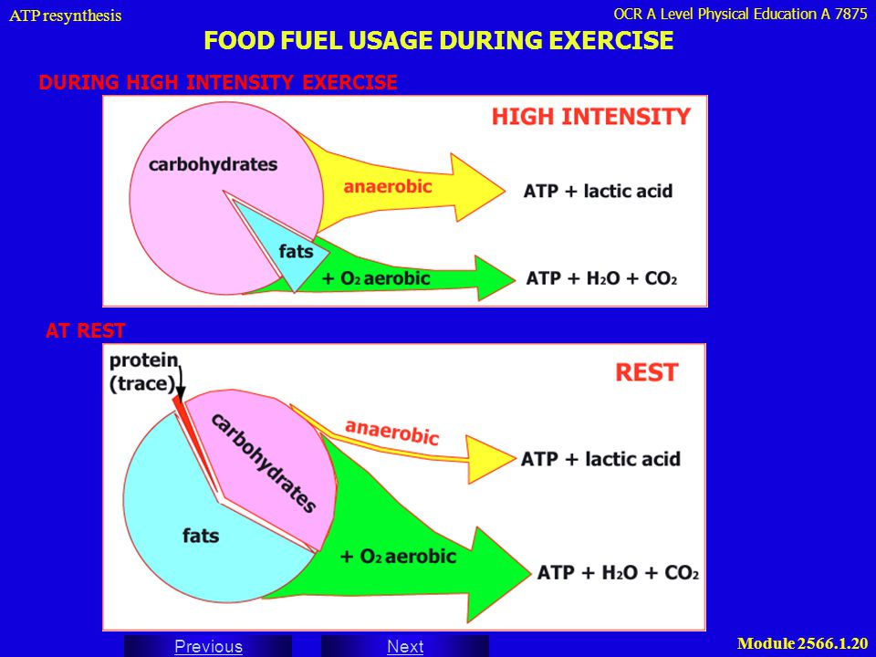 FOOD FUEL USAGE DURING EXERCISE