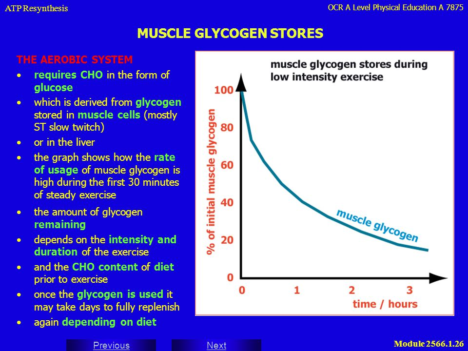 Muscle Glycogen Resynthesis and Bodybuilding