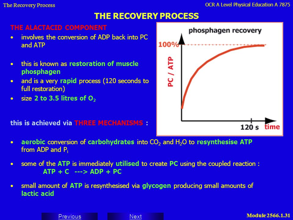 THE RECOVERY PROCESS THE ALACTACID COMPONENT