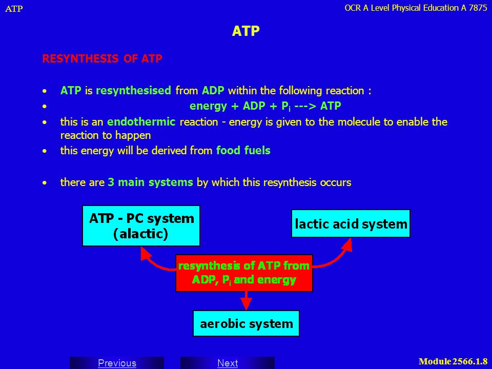 ATP ATP. RESYNTHESIS OF ATP. ATP is resynthesised from ADP within the following reaction : energy + ADP + Pi ---> ATP.