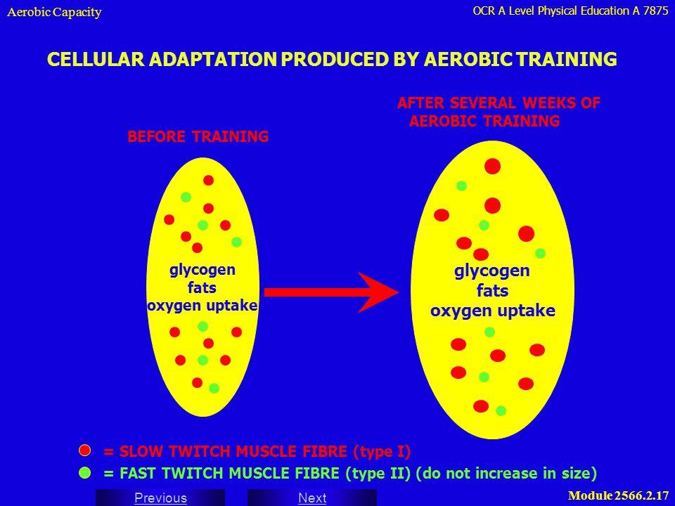 CELLULAR ADAPTATION PRODUCED BY AEROBIC TRAINING