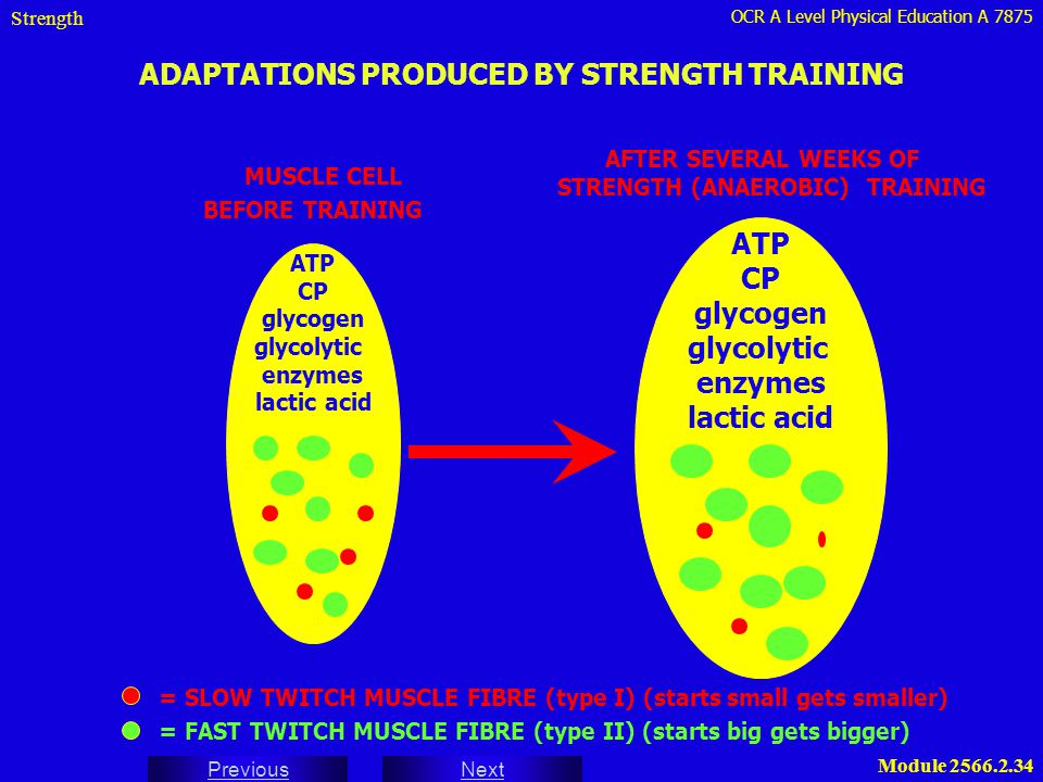 ADAPTATIONS PRODUCED BY STRENGTH TRAINING