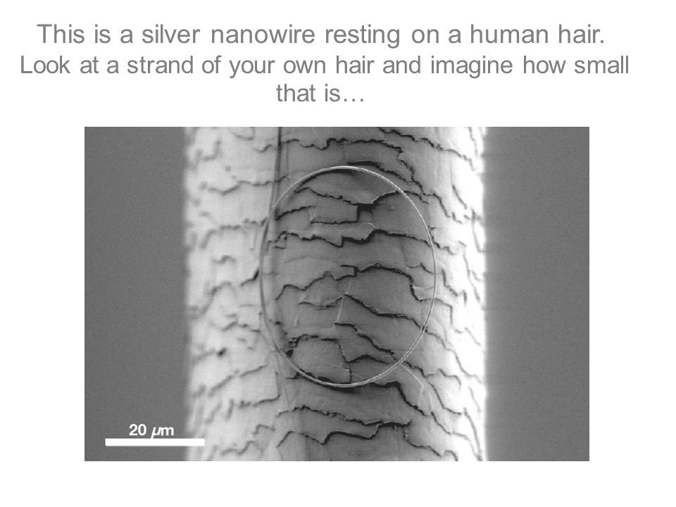 This is a silver nanowire resting on a human hair