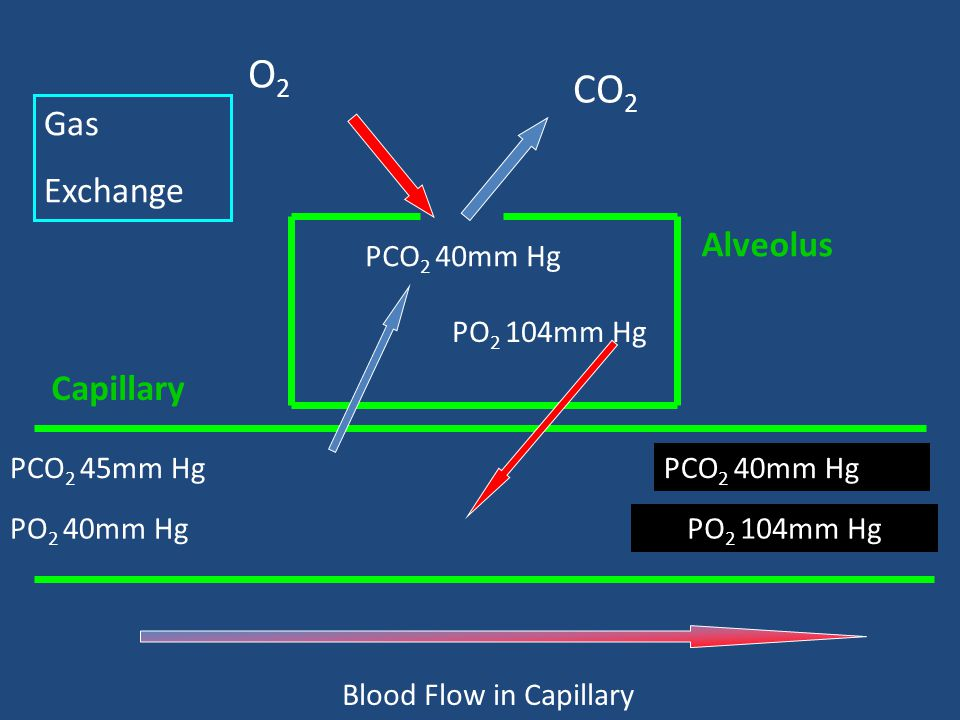 Blood Flow in Capillary
