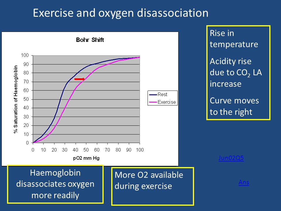 Exercise and oxygen disassociation