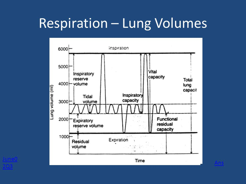 Respiration – Lung Volumes