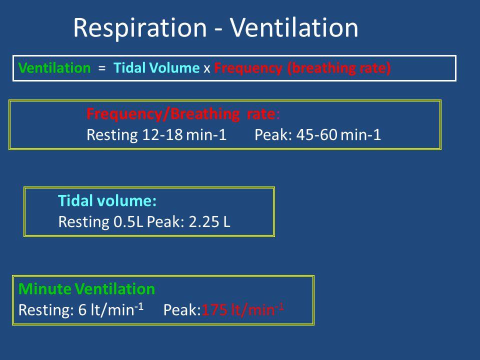 Respiration - Ventilation